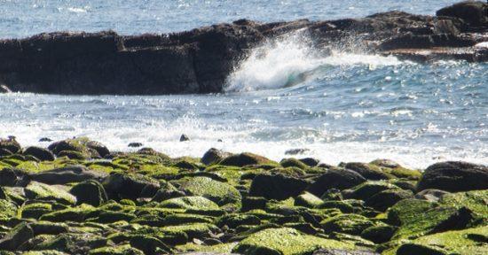 荒波と岩海苔